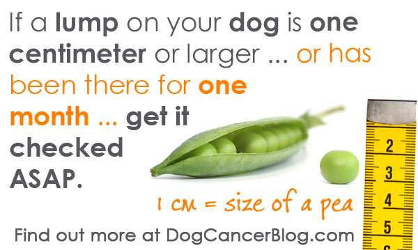 lumps on dogs