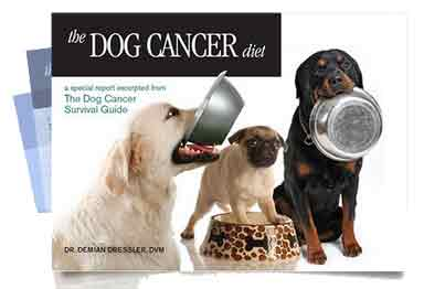 The Dog Cancer Diet on Dog Cancer Blog