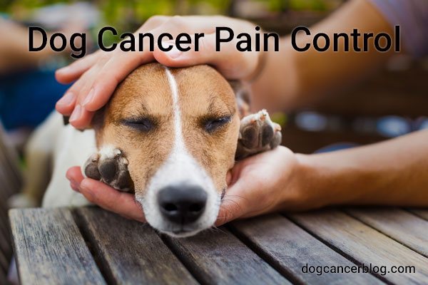 dog cancer pain