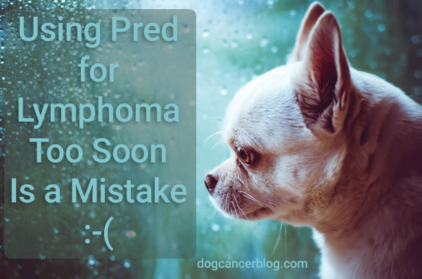 prednisone for dog lymphoma