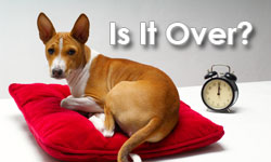 Dog Cancer TV: Is It Over?