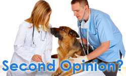 DogCancer.TV: Getting a Second Opinion on Your Dog's Cancer Diagnosis
