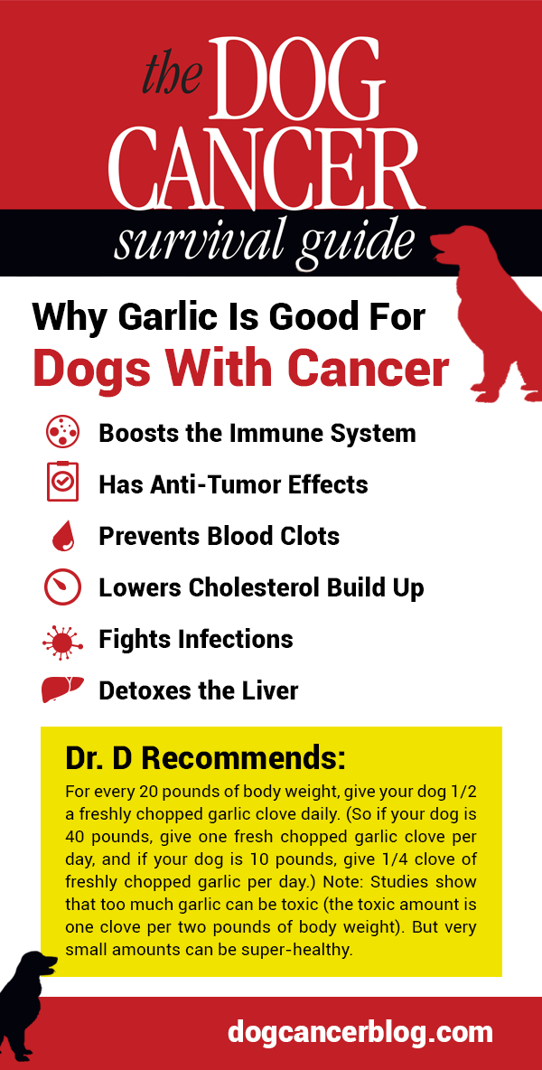 Is Garlic Bad for Dogs? No! Garlic Is