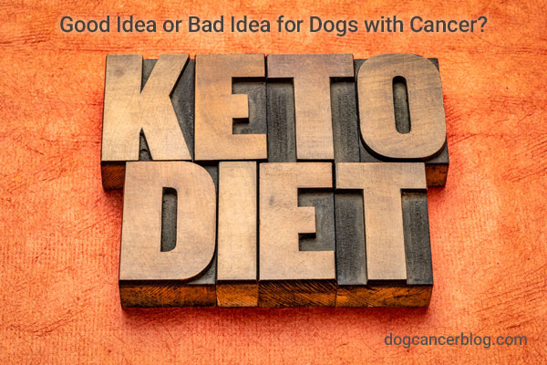 keto diet dogs cancer